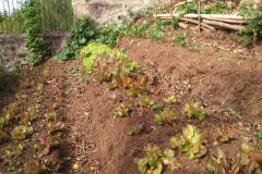 backyard_gardening_four