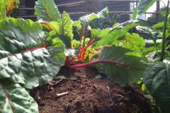 backyard_gardening_one