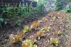 backyard_gardening_seven