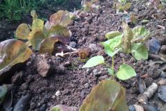 backyard_gardening_six