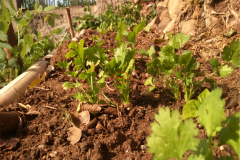backyard_gardening_ten